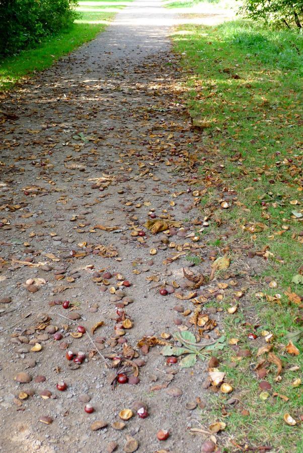 kastanjes herfst Bremen